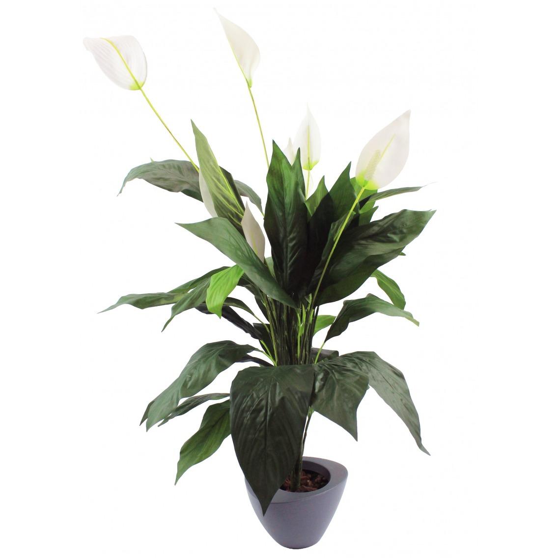 Spathiphyllum wallisii artificiel