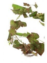 Guirlande de vigne automne