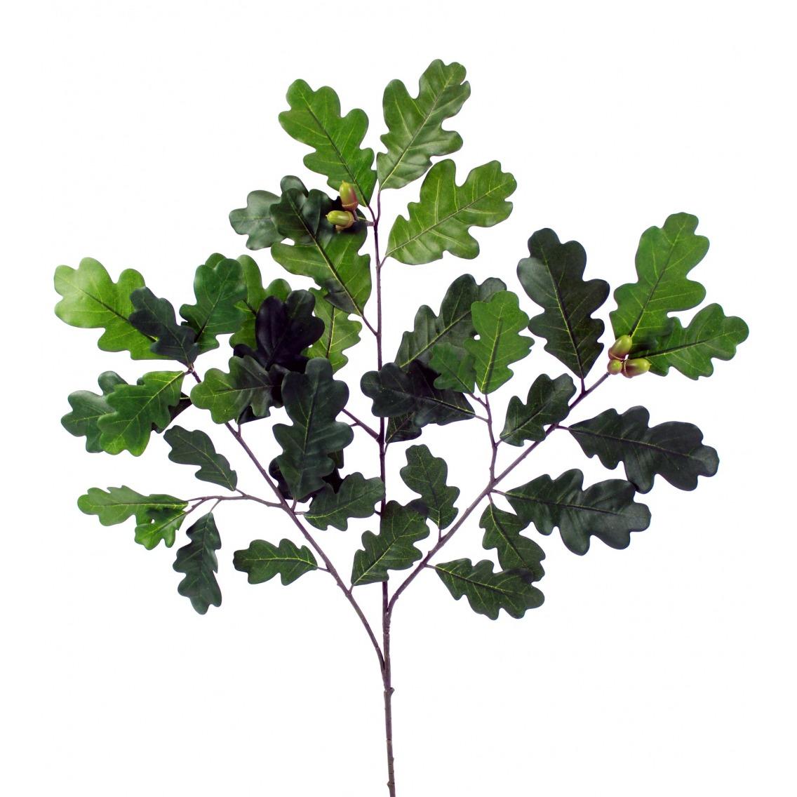 Branche de chêne feuillue