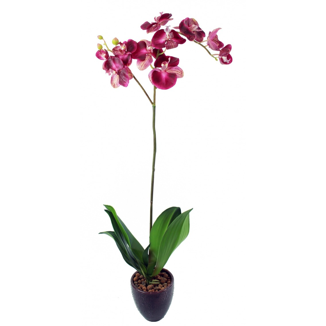 Phalaenopsis artificielle simple