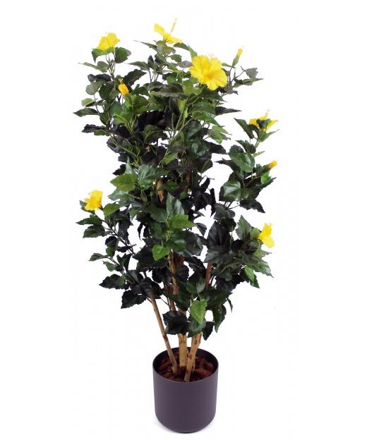 Arbuste hibiscus jaune 110 cm