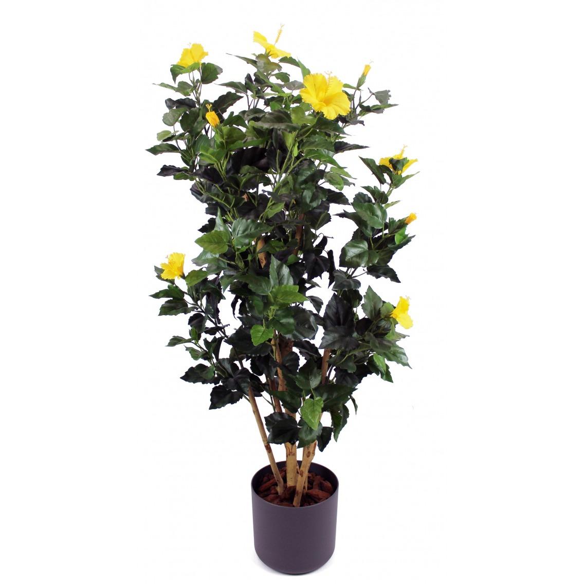Arbuste hibiscus jaune