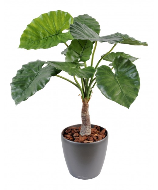 Alocasia calidora artificiel 80 cm
