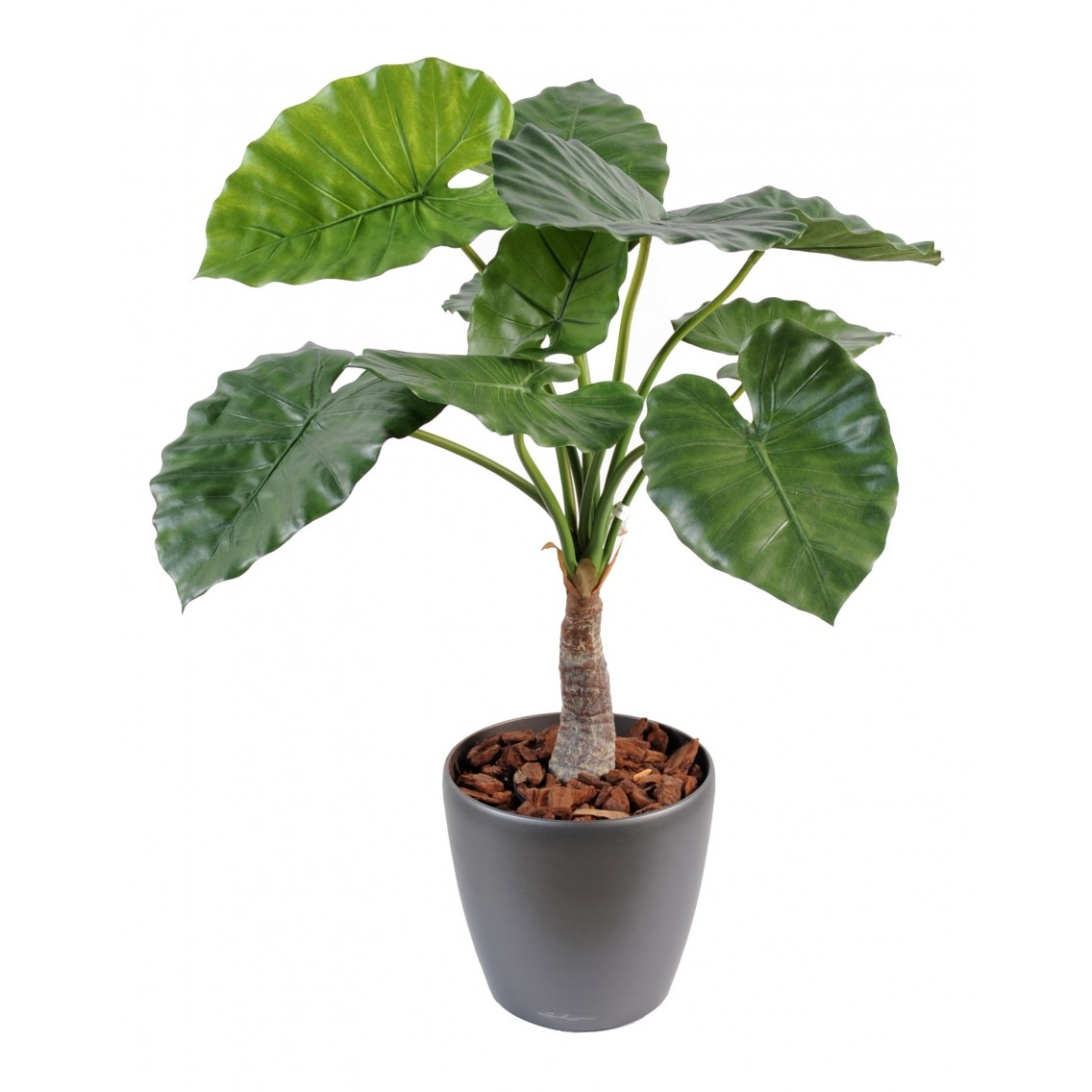 Alocasia calidora artificiel