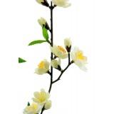 Branche de cerisier blanc