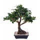 Bonsai artificiel ficus