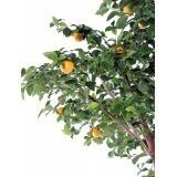 Oranger artificiel tronc double