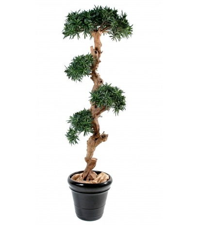 Podocarpus artificiel tronc noueux