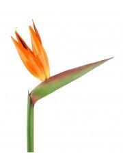 Tige de strelitzia artificielle fleurie