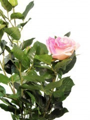Rosier artificiel rose