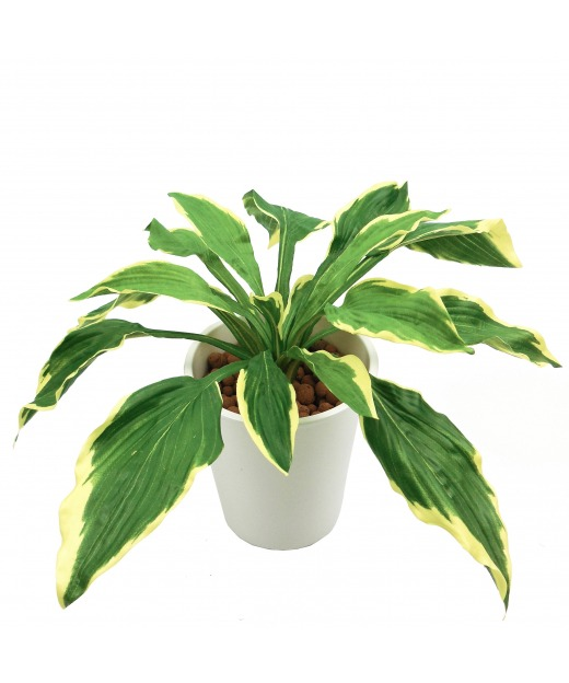Hosta artificiel d'asie