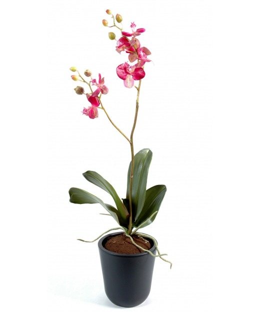 Phalaenopsis artificielle pousses