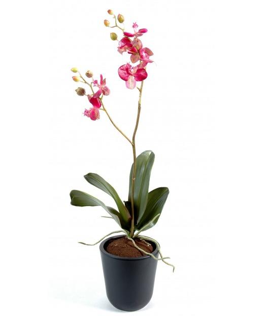 Phalaenopsis artificielle pousses 70 cm