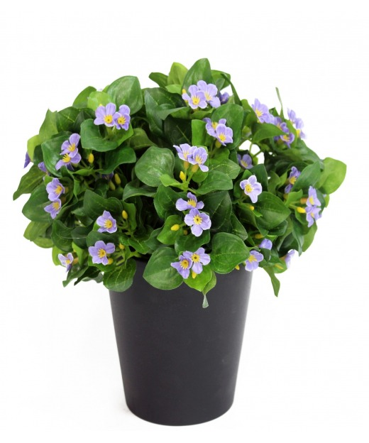 Violette de Perse 20 cm