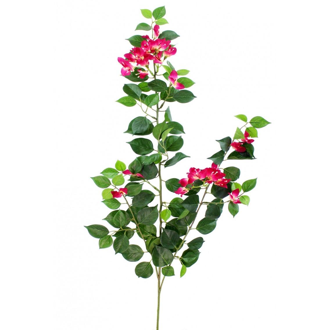 Tige de bougainvillée fleurie