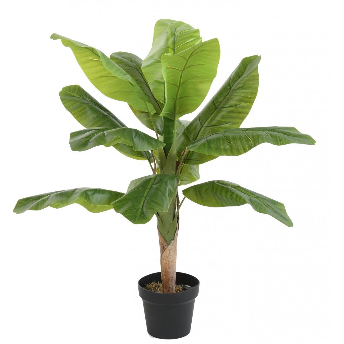 Bananier artificiel pousse
