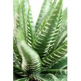 Aloe artificiel vert et blanc