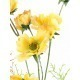 Cosmos jaune artificiel