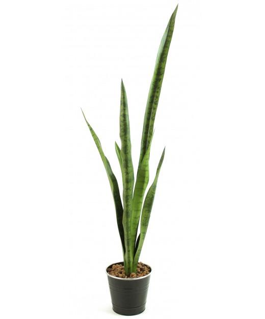 Grande sansevière verte 103 cm