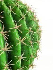 Échinocactus artificiel