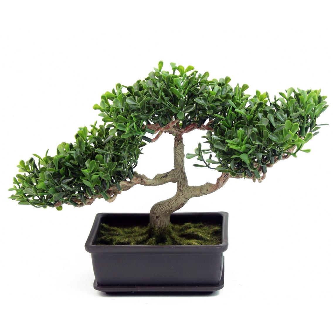 Bonsaï arbre à thé