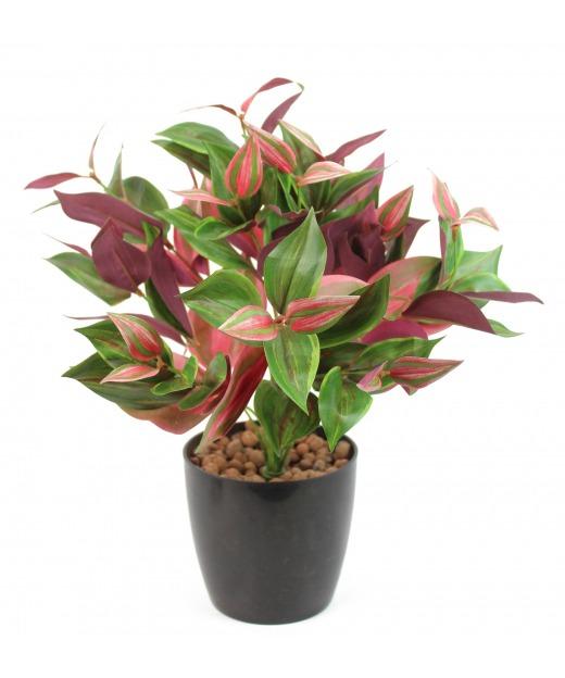 Tradescantia rouge et vert 40 cm