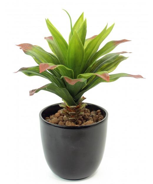 Agave vert et rouge 35 cm
