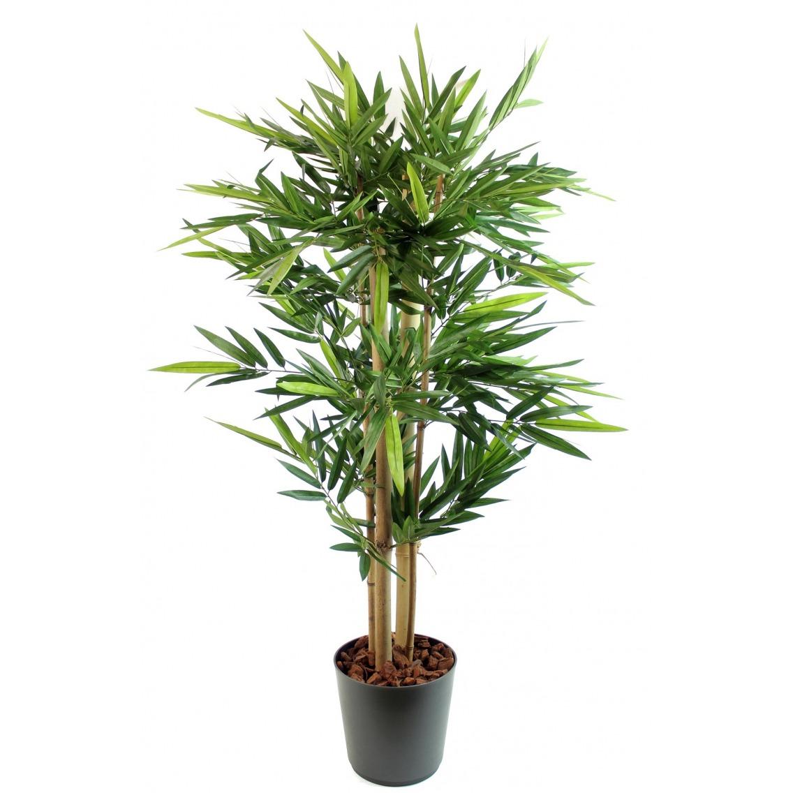 Bambou à grosses cannes
