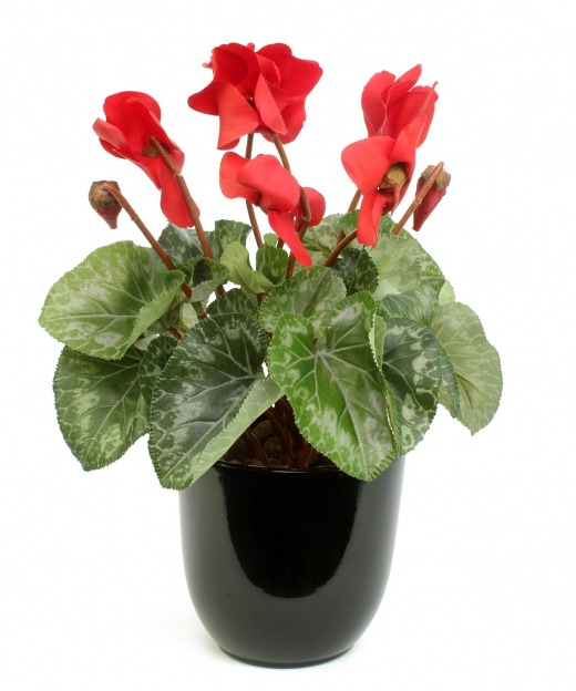 Cyclamen artificiel rouge 32 cm