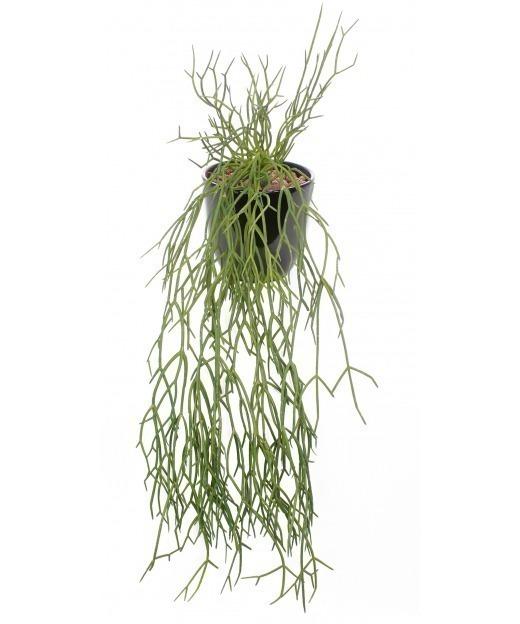 Chute de rhipsalis artificielle 50 cm