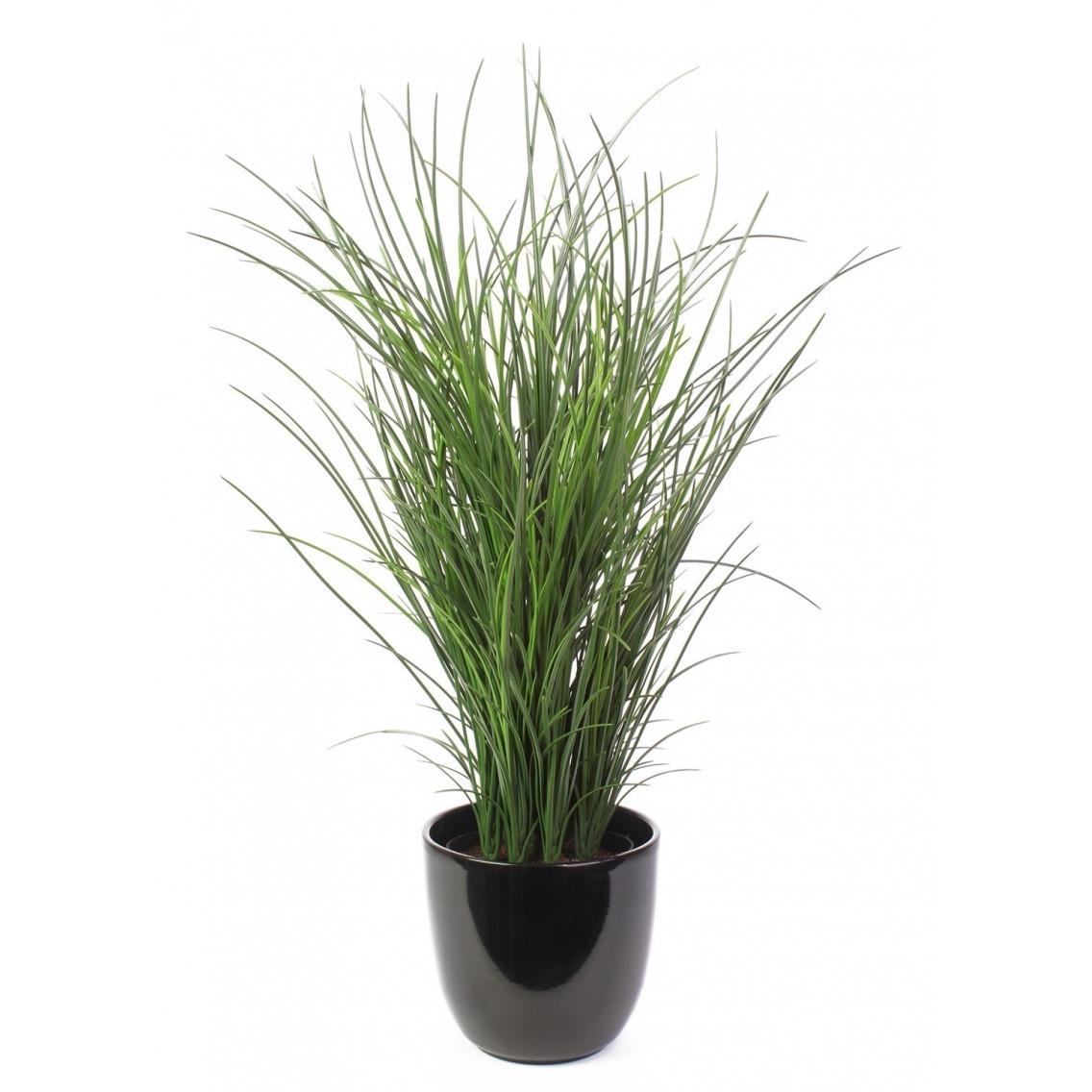 Grande herbe en pot