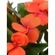 Impatiens artificielle walleriana