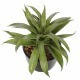 Mini agave artificiel