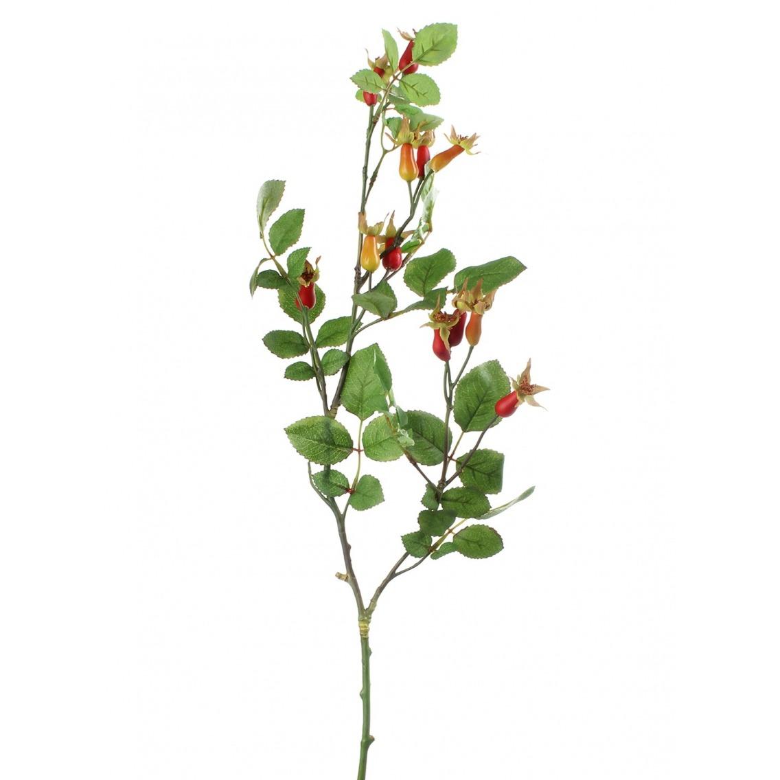 Branche d'églantier fleuri