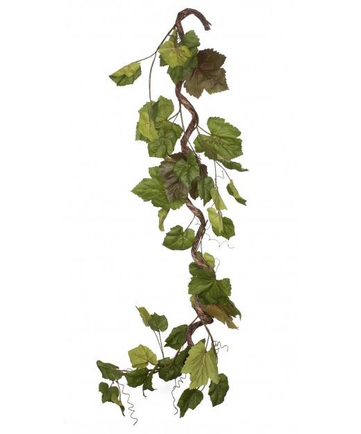 Branche de vigne tortueuse