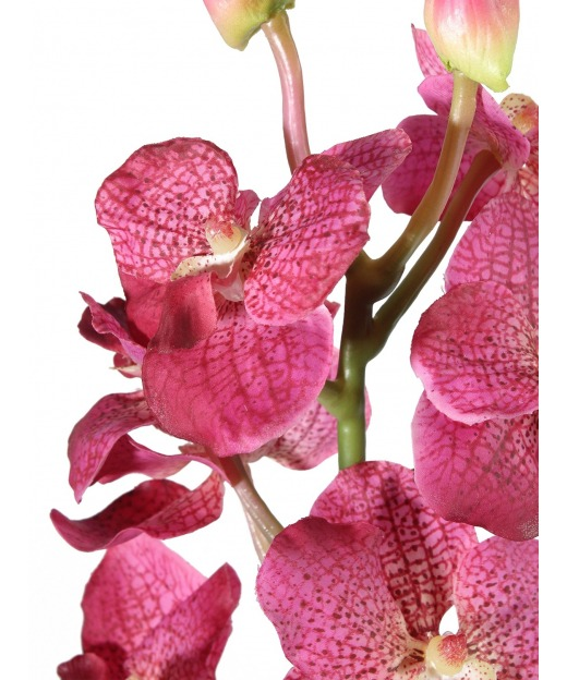 Dracaena fragrans artificiel 53 cm