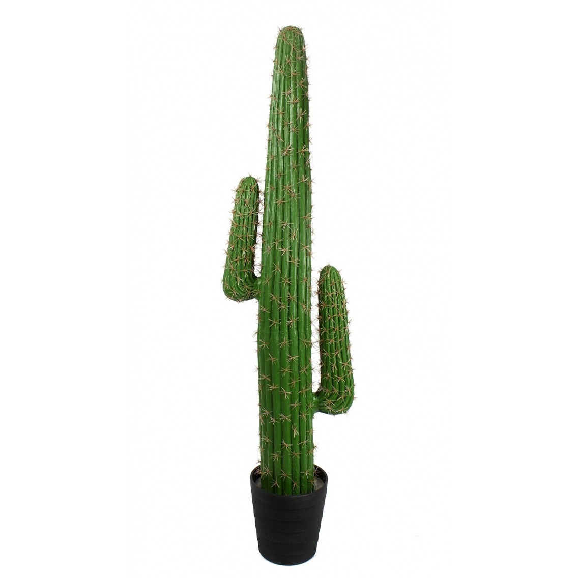 Podocarpus artificiel buisson