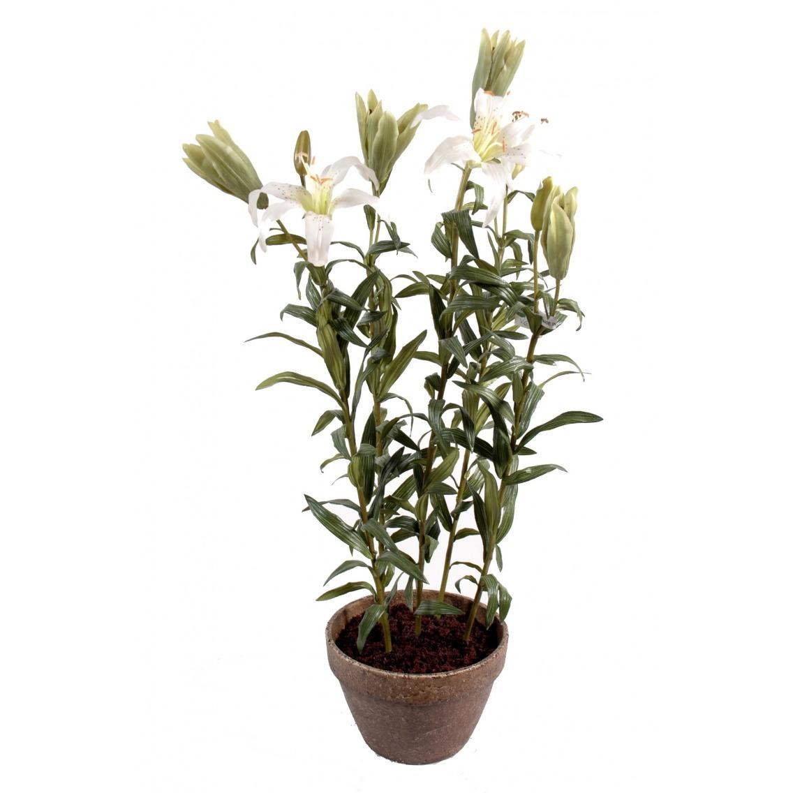 Lilium pot terre