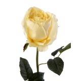 Rose ancienne artificielle