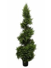 Cypres juniperus spirale fine