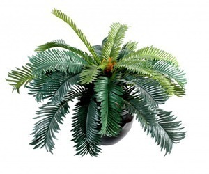 cycas artificiel